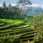 """Terraced Rice Fields"" by EdmundLowe"
