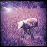 """Bali Rice Field Worker"" by EdmundLowe"
