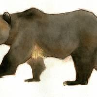 walking bear Art Prints & Posters by jessgolden