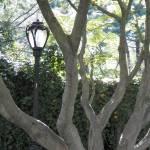 """""""A Light Hidden"""" by Dzines"""