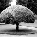 """umbrella tree"" by hughwilliamson"