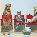 """Pets At Vets"" by johnlund"