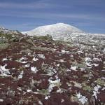 """""""Diapensia Tufts and Mount Washington in Spring"""" by timseaver"""