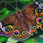 """Buckeye Butterfly"" by PjCreates"