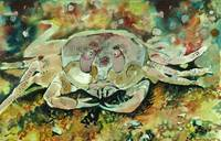 The Ghostly Crab Under Water