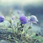 """""""finally spring"""" by Piri"""