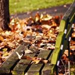 """Fall Park Bench"" by raetucker"