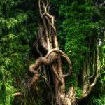 """Tree Trunk Twists"" by InspiraImage"