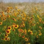"""""""Blowing Yellows"""" by bluejawa"""