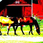 """Grazing on the Farm"" by ThomasJoseph"