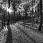 """""""forest b+w"""" by MikeandAmy"""