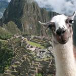 """Machu Picchu: Bossy the Llama"" by OverYonderlust"