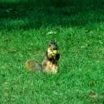 """""""Got Nuts?"""" by ThomasJoseph"""