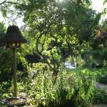 """garden"" by Dan-TuyetTham"