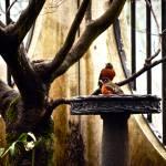"""""""Bird Bath"""" by raetucker"""