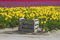 Field of Color -