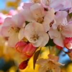 """""""Blossom Confetti"""" by newimage"""