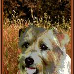 """Norfolk Terrier"" by OneRudeDawg"
