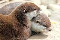 Otter, Sister and Brother