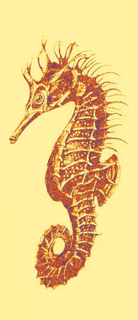 seahorse- right facing