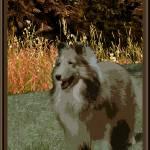 """""""Shetland Sheepdog"""" by OneRudeDawg"""