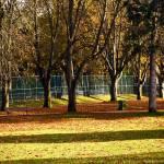 """The Park"" by raetucker"