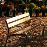 """The Park Bench"" by raetucker"