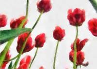 Red Tulips from the Bottom Up 1