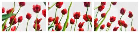 Red Tulips from the Bottom Up Tryptich