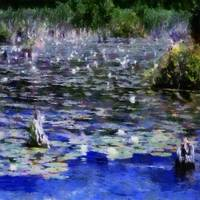 Water Lilies in the River