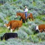 """""""Moving With The Cattle Down The Hill"""" by artsandi"""