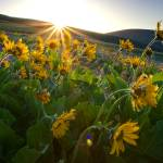"""""""Dalles Mountain Sunrise"""" by aphimages"""