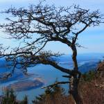 """Craggle Tree"" by Arooski"