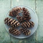 """still life with seven pine cones"" by Piri"