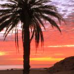 """Palm Tree and Dawn Sky, Cabo San Lucas Mexico"" by RoupenBaker"