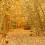 """The Journey Of Autumn"" by artsandi"