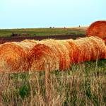 """Hay Bales"" by raetucker"