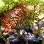 """""""the grove"""" by linneaheide"""