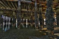 Under the Coupeville Wharf - Whidbey Island