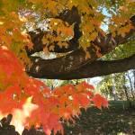 """""""Fall in Wisconsin"""" by eagleswings"""