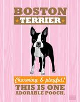 Boston Terrier Pink/Orange