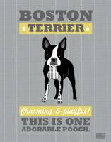 Boston Terrier Gray/Gold