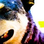 """""""Dog Fantastic"""" by julieann"""
