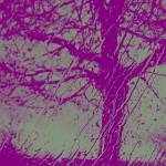 """Purple Grey Tree of Hope"" by Barbara_Stock"