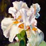 """Iris Delight"" by normawilsonfineart"
