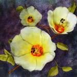 """Desert Hibiscus"" by DebMerritt"