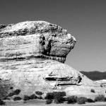 """""""Desert Sentry"""" by ginadittmer"""