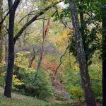"""""""Trees and Stream in Fall"""" by KsWorldArt"""