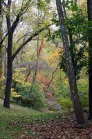 Trees and Stream in Fall