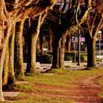 """Park Path"" by raetucker"